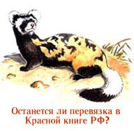 Останется ли перевязка в Красной книге России?