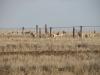 Дзерены у системы на границе России с Монголией, Забайкальский край. Фото А. Барашковой