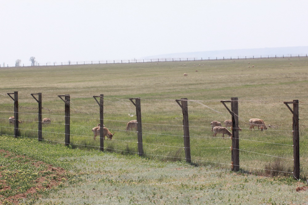 Электроизгородь вокруг питомника для сайгаков. Республика Калмыкия