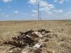 Погибший могильник под линией электропередач Лебедев-Долинный. Первомайский район, Оренбургская область. Фото  Е. Барбазюка