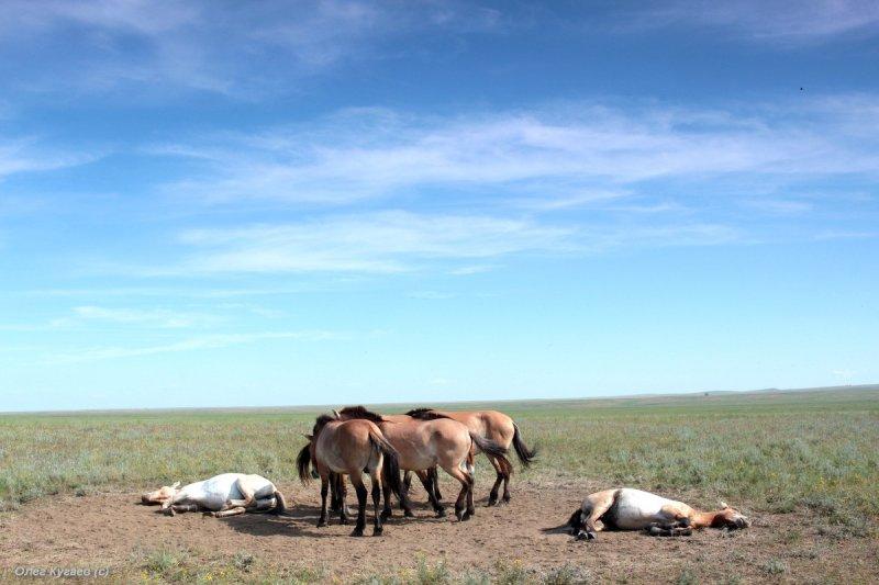 Работа международной съемочной группы в Оренбургском заповеднике, 27 мая - 5 июня 2016 г. Фото Н. Судец