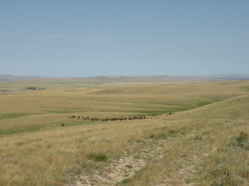 В Оренбургской области еще остаются крупные степные массивы, где уровень пастбищной нагрузки оптимален для сохранения степных экосистем. Сохранить эту гармонию - одна из важнейших задач плана для этого региона. Фото И. Смелянского