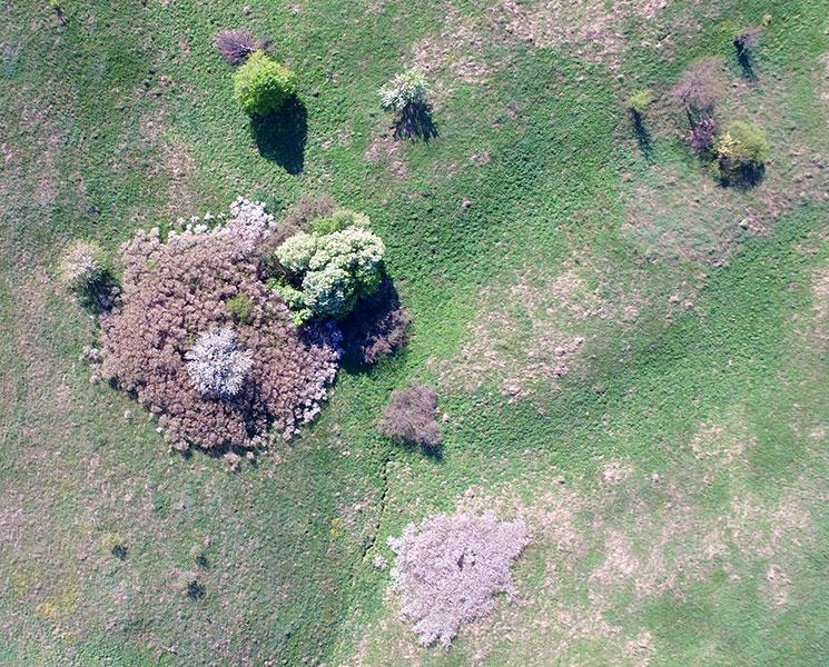 Фотосъемка с квадрокоптера, Центрально-Черноземный заповедник. Фото Г. и О. Рыжковых
