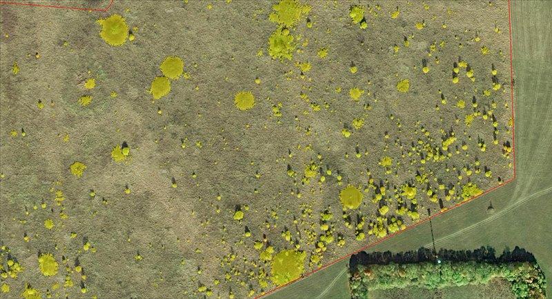 Результат картирования древесно-кустарниковой растительности, Центрально-Черноземный заповедник. Фото Г. и О. Рыжковых