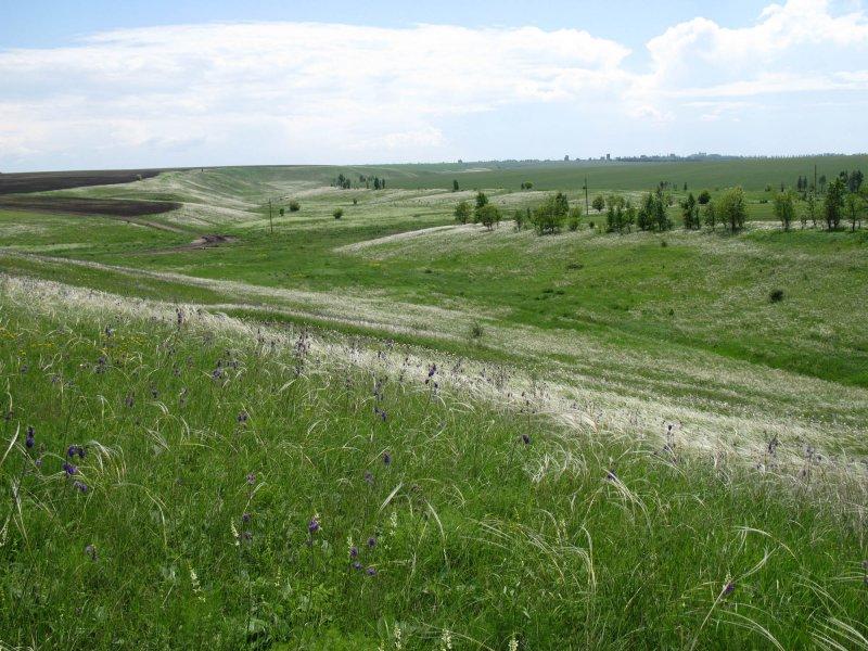 Ковыльные степи балки Ржавец, Курская область. Фото А.В. Полуянова