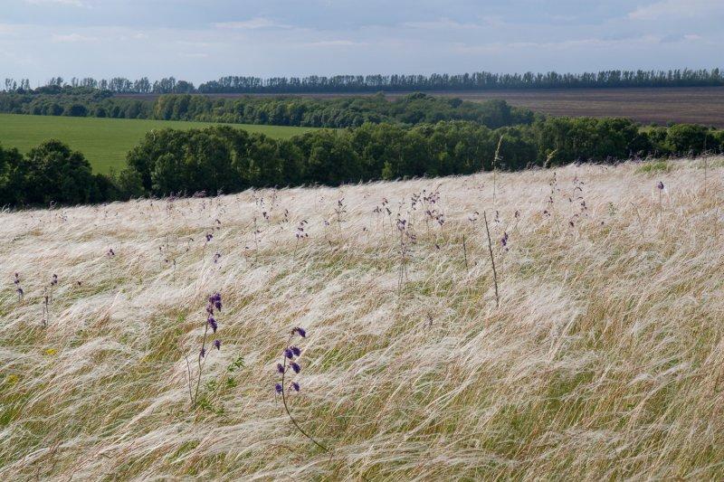 Хотя водораздельные луговые степи Курской области распаханы почти полностью, в балках еще есть что сохранять. Фото С. Титовой
