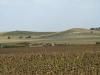 Общий вид урочища «Бекетовские холмы», Курская область. Фото предоставлено А.В. Полуяновым