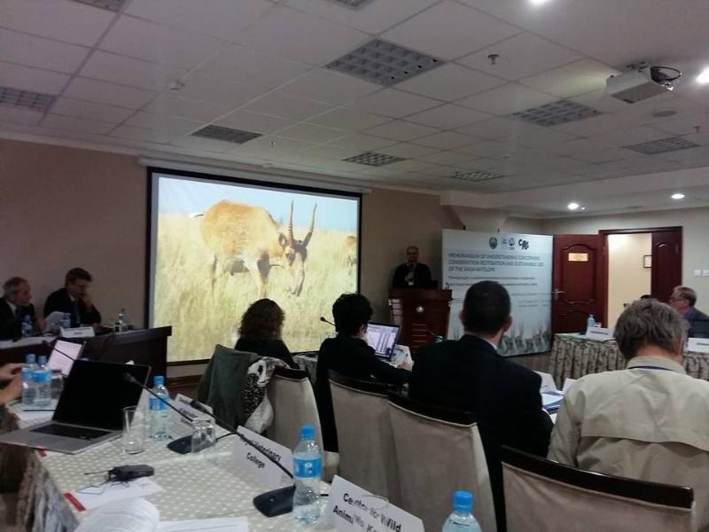 Третье совещание стран-участников Меморандума о взаимопонимании относительно сохранения, восстановления и устойчивого использования антилопы сайги, Ташкент, 26-29 октября 2015 г. Фото Б. Убушаева