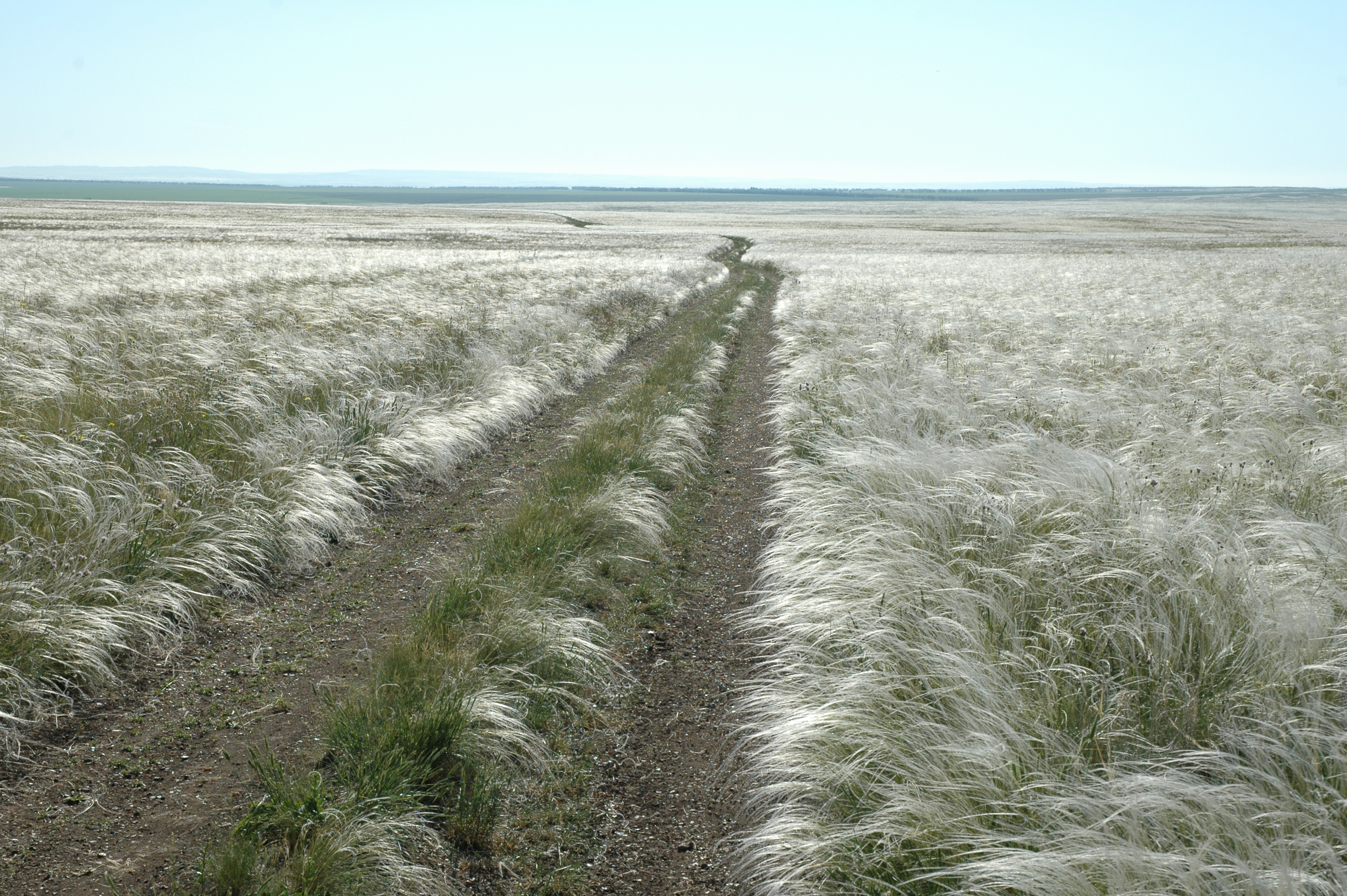 почвы степей фото