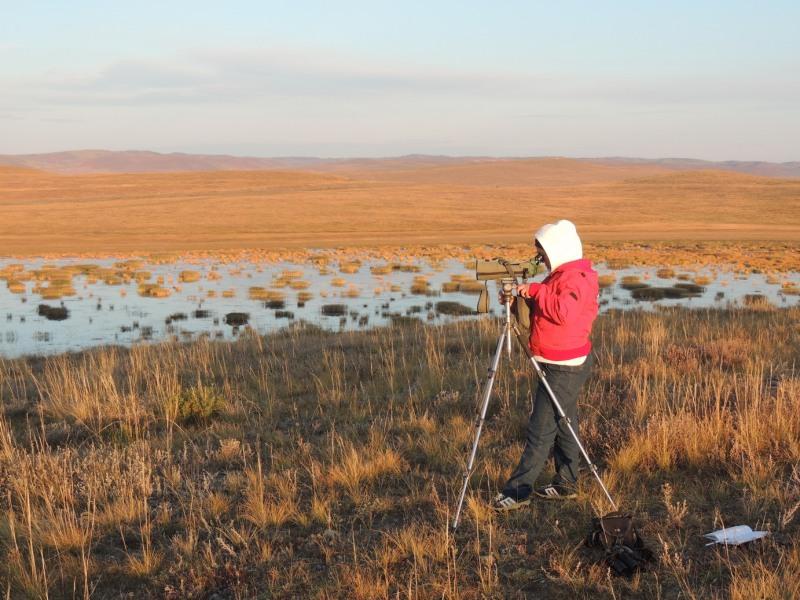 Светлана Бальжимаева проводит наблюдения за околоводными птицами. Забайкальский край. Сентябрь 2012. Фото О.А. Горошко