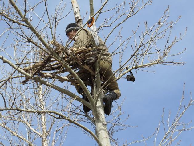 Установка гнездовой платформы для мохноногого курганника. Фото предоставлено Даурским заповедником