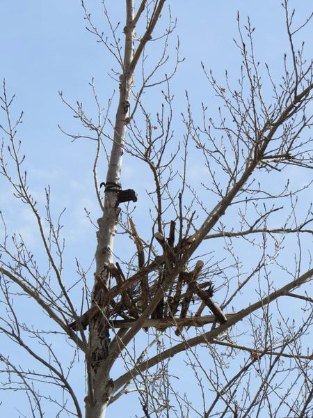 Над гнездовой платформой установлена видеоловушка. Фото предоставлено Даурским заповедником