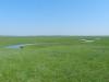 Река Улдзя, Восточная Монголия. Фото Т. Горошко