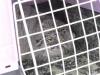 Выпуск манулов в природу. Даурский заповедник, апрель 2016 г. Фото предоставлено заповедником