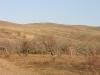 Степной ландшафт Семеновского заказника. Балейский район, Забайкальский край. Фото Ольги Кирилюк
