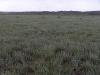 Залежная сукцессия в сухостепной подзоне надолго задержалась на стадии доминирования многолетних полыней (Artemisia austriaca и A. gracilescens). Участок заброшен около 20 лет назад. Предгорья Чингистау, Восточный Казахстан. Июнь 2007. Фото И. Смелянского