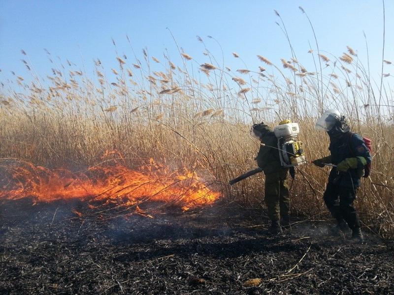 """Добровольцы из """"Гринпис"""" тушат пожар в Астраханском заповеднике.  Фото И. Подгорного"""