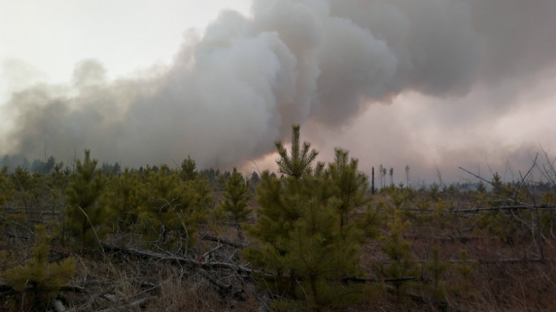 Дым над Цасучейским бором. Пожар, апрель 2012. Фото В. Кирилюка