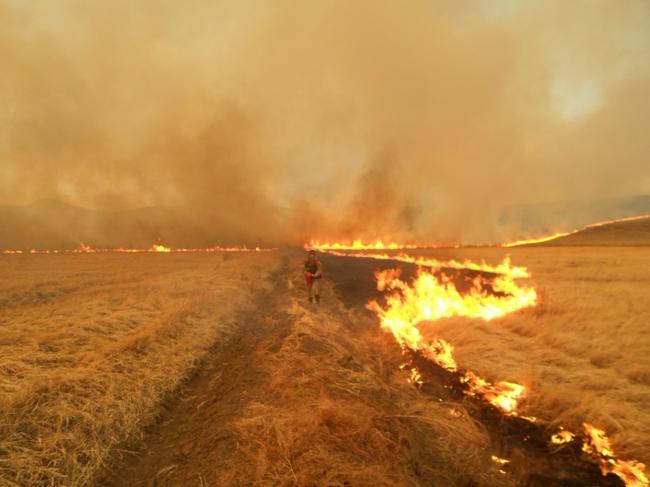Степной пожар в заказнике