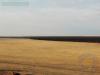 Дорога на «Зеленый сад» - огонь прошел ровно вдоль границы основного участка заповедника, июнь 2014 г. © Богдинско-Баскунчакский заповедник