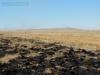 Противопожарная граница основного участка заповедника оказалась надежной, июнь 2014 г. © Богдинско-Баскунчакский заповедник