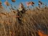 В Астраханском заповеднике горят тростники. Фото И. Подгорного