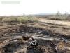 Пожар начинался здесь - в нескольких километрах от границы заповедника, август 2014 © Богдинско-Баскунчакский заповедник