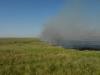 Степные пожары обычны в Оренбургской области, как и повсюду в степном регионе России. Пожары в степи – характерный и важный нарушающий фактор. Ранней весной и поздней осенью экологический вред от пожаров невелик, но летом они чрезвычайно разрушительны. Лето 2010 года оказалось очень жарким и сухим, поэтому пожары были особенно частыми и сильными. Например, в этом пожаре степь сгорела на огромной территории, не менее 2000 га, на водоразделе рр. Карабутак и Караганды. Адамовский р-н Оренбургской области. Июнь 2010. Фото И.Э. Смелянского.