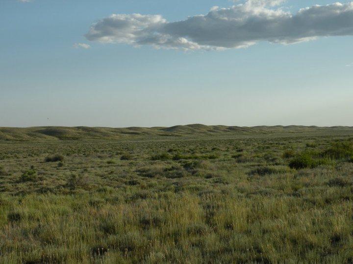 Пустынная степь на восточной стороне холмов Колмаганбель. Казахстан, июнь 2009. Фото И.Э. Смелянского
