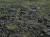 Stipa caucasica. Сухая петрофитная степь с кустами Spiraea hypericifolia на водоразделе Бутакана и Суыкбулака. Июнь 2009. Фото И.Э. Смелянского.