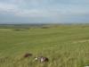Чарышская степь. Фото И. Смелянского