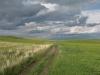 Степные предгорья Алтая. Шипуновский район, Алтайский край. Фото А.Н. Барашковой