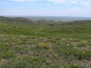 Petrophytic variant of genuine steppe grasslands and shrublands in Kalba Mts, East Kazakhstan, May 2006