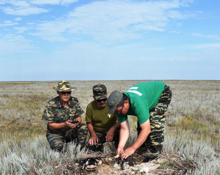 Осмотр и кольцевание птенцов степного орла.  Республика Калмыкия. Фото с сайта заповедника «Черные Земли»