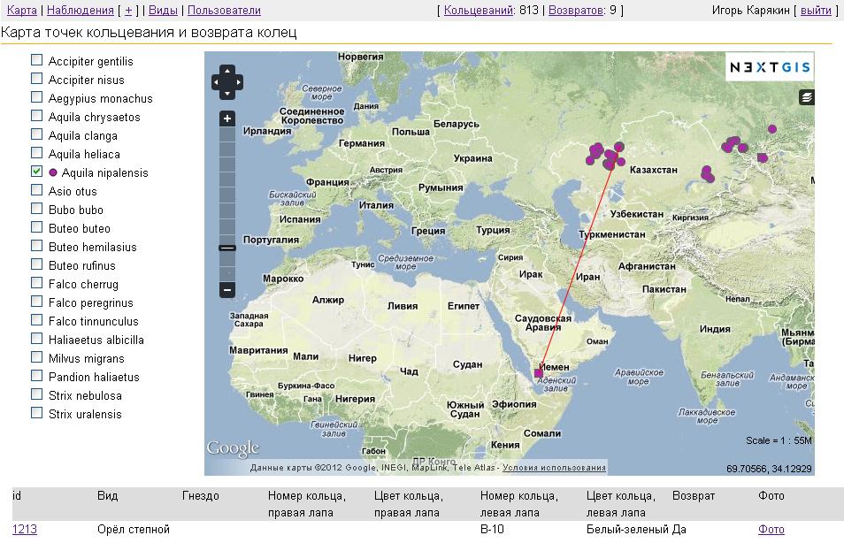 Схема миграции степного орла, окольцованного летом 2012 года в Оренбуржье