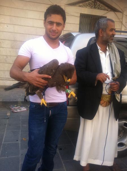 Степной орел, родившийся в Оренбургской области летом 2012 года, пойман в Йемене