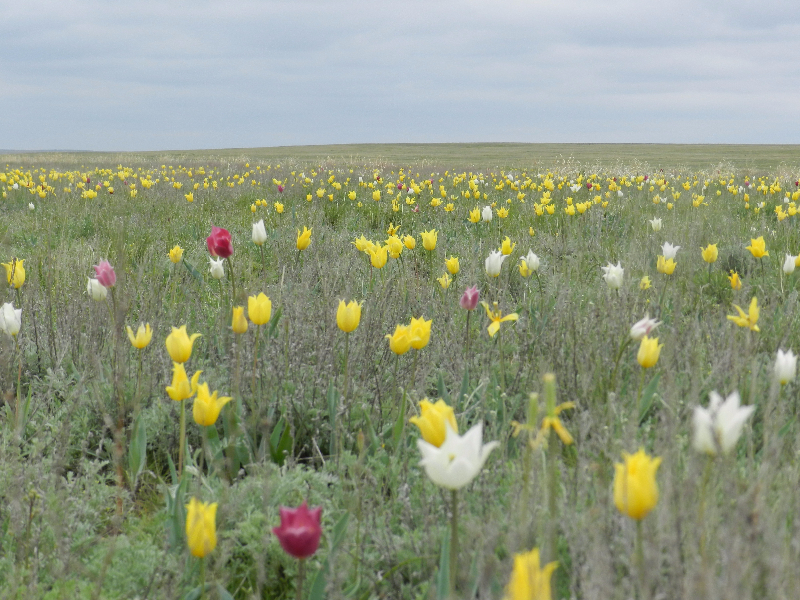 Весенние краски Предуральской степи. Фото Рафили Бакировой