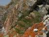 Полынь солянковидная, Artemisia salsoloides, Красная книга РФ, Губерлинские горы, Оренбургская область. Фото И. Смелянского