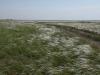 Stipa zalesskii – доминант настоящей степи на водоразделе рек Жарлы и Кийма. Оренбургская область. Июнь 2010. Фото И.Э. Смелянского.