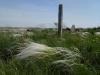 Stipa zalesskii – один из наиболее характерных доминантов настоящих степей. Старое казахское кладбище. Июнь 2010. Фото И.Э. Смелянского.