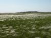 Stipa zalesskii – доминант настоящей степи в бассейне реки Карабутак. Оренбургская область. Июнь 2010. Фото И.Э. Смелянского.