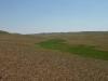 В засушливом ландшафте даже небольшое понижение в рельефе дает значительное увеличение доступности влаги, и это хорошо отражается в растительности: ложбина занята лугом, тогда как окружающие холмы покрыты сухой (ксерофитной) степью. Беляевский р-н Оренбургской области. Июнь 2010. Фото И.Э. Смелянского