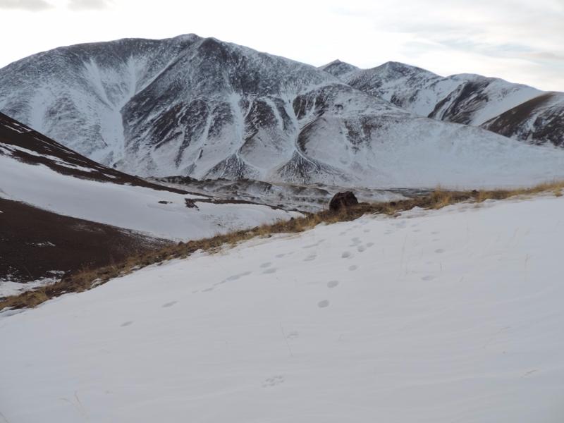 Хребет Сайлюгем, Республика Алтай. Фото А.Н. Барашковой
