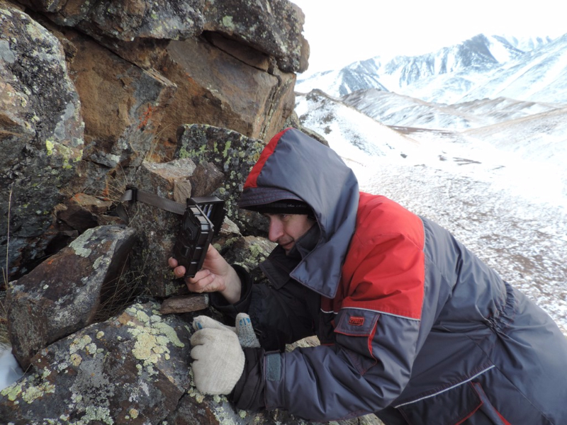 Проверка фотоловушки, хребет Сайлюгем. Фото А.Н. Барашковой