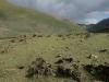 Ксерофитная (сухая) горная степь на хребте Сайлюгем (долина р. Чаган-Бургазы). Республика Алтай, июль 2009. Фото И.Э. Смелянского