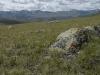 Горная тундростепь на хребте Сайлюгем. Республика Алтай, июль 2009. Фото И.Э. Смелянского