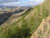 Сухие лиственничные леса проникают в горные сухие (ксерофитные) степи вдоль долин и глубоких ущелий. Массив Талдуаир (р. Бар-Бургазы), Республика Алтай, июнь 2008. Фото И.Э. Смелянского