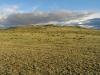 Кусты Caragana bungeana и C. spinosa в горной сухой (ксерофитной) степи в массиве горы Талдуаир, Республика Алтай, июнь 2008. Фото И.Э. Смелянского
