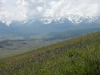 Meadow steppe. Aspect of Schizonepeta multifida - Kurai ridge - Ortolyk river valley - Northern-Chuysky ridge as a background. Photo by Ilya Smelansky