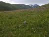 Луговая степь - водораздел Караак-Карагай - аспект Heteropappus altaicus, Республика Алтай. Фото И. Смелянского
